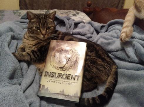 6 Wink Insurgent